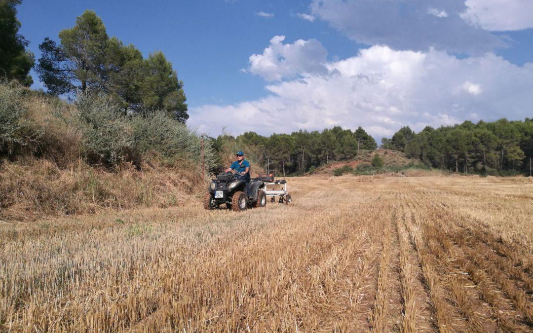 Factores de la Salud del Suelo a Considerar en la Planificación Agrícola del Siguiente Año